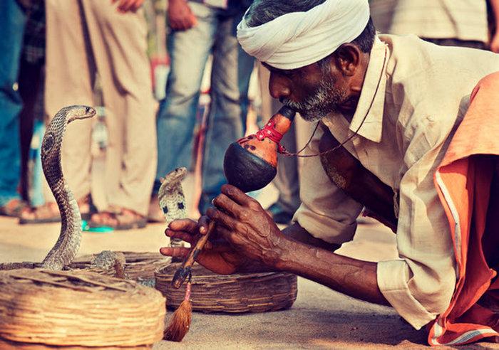 Индийский заклинатель змей.